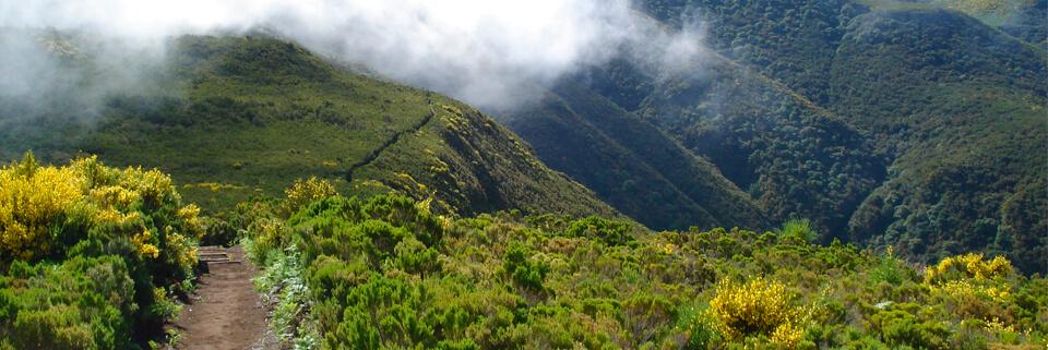 Madeira - Vereda do Fanal